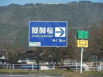 01 醍醐桜 国道313号線 美川橋南詰交差点.JPG