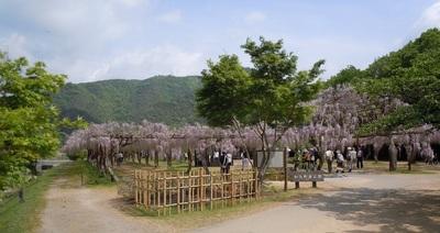 02 和気町 藤公園.jpg