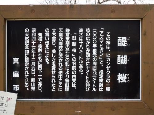 03 醍醐桜 説明.JPG