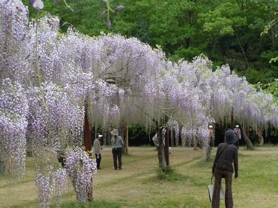 04 和気町 藤公園.jpg