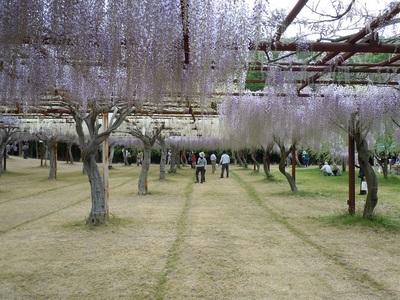 05 和気町 藤公園.JPG