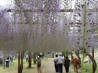 06 和気町 藤公園.JPG