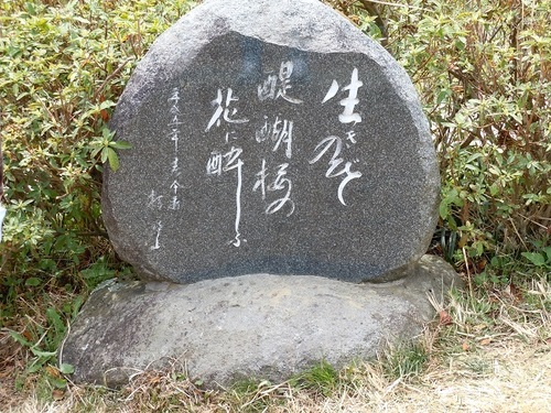 07 醍醐桜 句碑.JPG