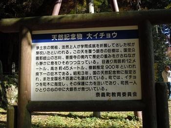 大銀杏について.JPG