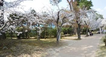 衆楽園 パノラマ3.JPG