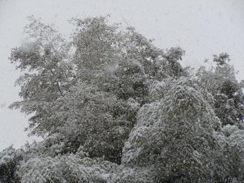 雪001.JPG